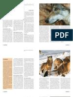 """""""Ulven"""" - artikel der opsummerer den danske ulvesag; af Mogens Trolle"""