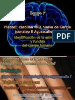 receptores de la piel.pptx