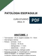 25+26 esofag
