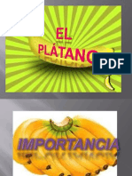 PLATANO PRESENTACION