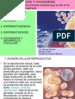 ESPERMATOGENESIS Y OVOGENESIS.ppt