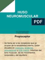 31007942 Huso Neuromuscular