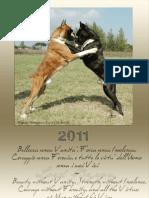 Calendario Boxer 2011