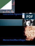 Leucocitos Agranulares