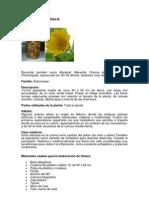 Practicas e Informacion de Farmacopea.