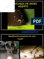 Karin Morfologia de Aedes