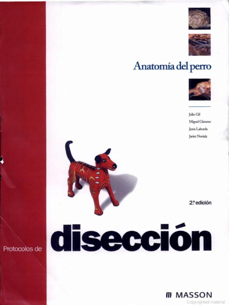 Perfecto Anatomía Y Fisiología Del Gato Disección Componente ...