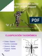 Mercedes Biologia y Desarrollo Aedes 25.03.13