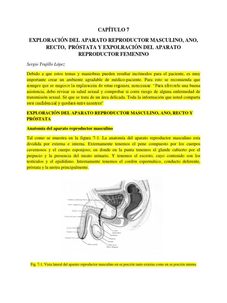 Asombroso Anatomía Genital Canina Foto - Imágenes de Anatomía Humana ...