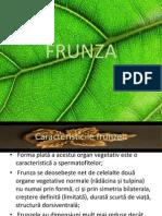 FRUNZA pp