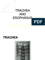 TRACHEA With Trans