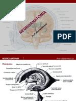 Ventriculos, Corpo Caloso,Sistema Limbico e Fornix