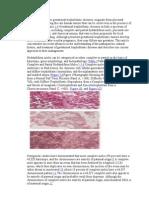 Chorionic Tumors