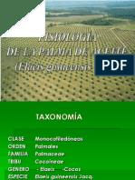 Fisiologia de La Palma
