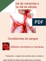 sistemacirculatorio-110614171547-phpapp01