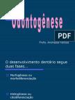 Odontogenese atualizada textos
