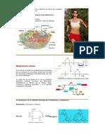 Bioenergética y Metabolismo