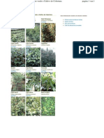 Especies Utilizadas Como Abono Verde o Cultivo de Cobertura Honduras