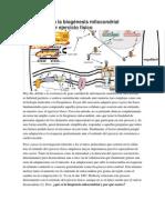 Introducción a la biogénesis mitocondrial estimulada por ejercicio físico