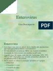 Particulas de Enterovirus