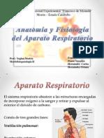 Fisio Pulmonar