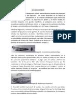 Mioceno inferior.docx