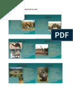 Imagini Cu Animale Din Diverse Zone Ale Lumii