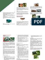 Plagas Importantes en El Cultivo de Aguacate