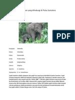 20 Hewan Yang Dilindungi Di Pulau Sumatera