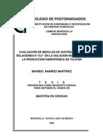 RAMÍREZ MARTÍNEZ, MARIBEL (2006)