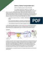 Fosforilacion Oxidativa y Cadena Transportadora de é
