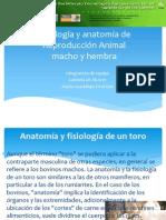 anatatomia y fisiologia de los animales bovinos.ppt