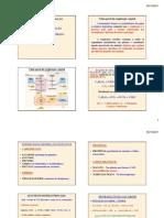Grad Unidade VII - Respirao.pdf