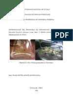 protocolo de desinfeccion de guazuma crinita y Cedrela odorata para propagacion in vitro