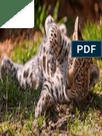 Animal Jaguar 253203