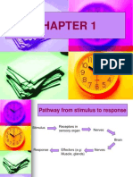 59207336-Chapter-1.ppt