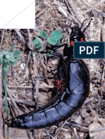Orden Coleoptera