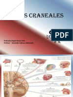 Clase Neuro- Pares Craneales