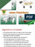 Digestion Del Caballo