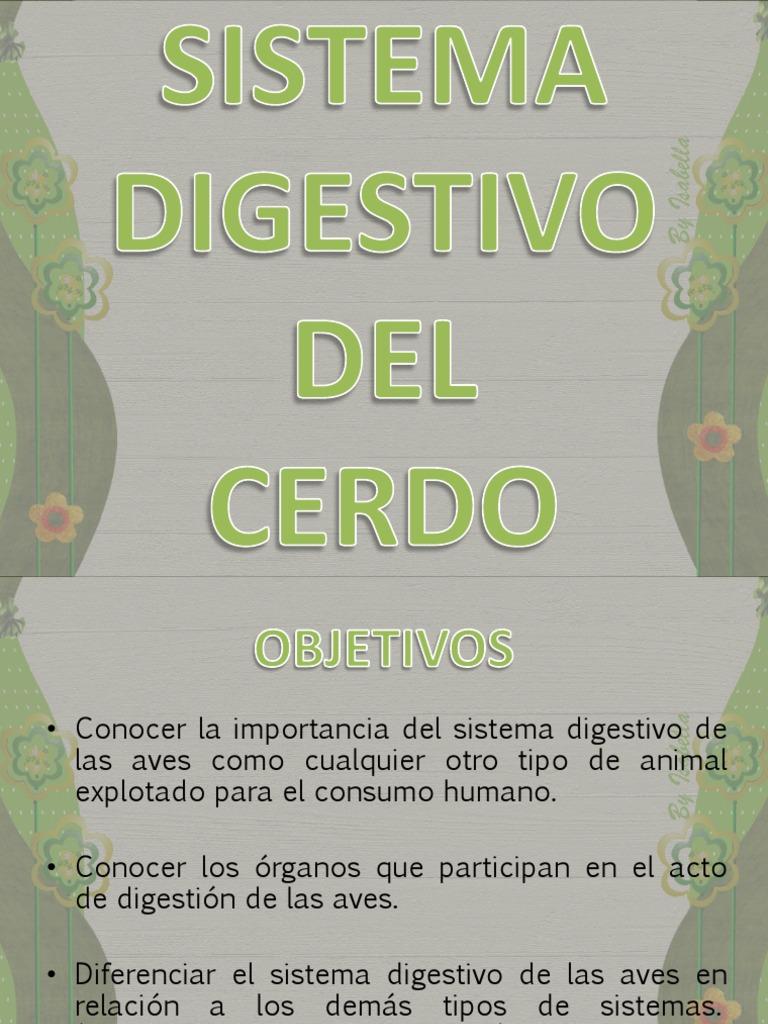Sistema Digestivo de Cerdos
