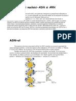 Acizii Nucleici-ADN Si ARN