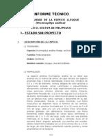 Prumnopitys andina Informe técnico