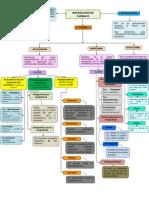 Tarea 6 Mapa Interaccion de Farmacos