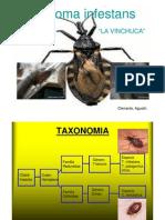 Triatoma infestans mayo 2013.pdf