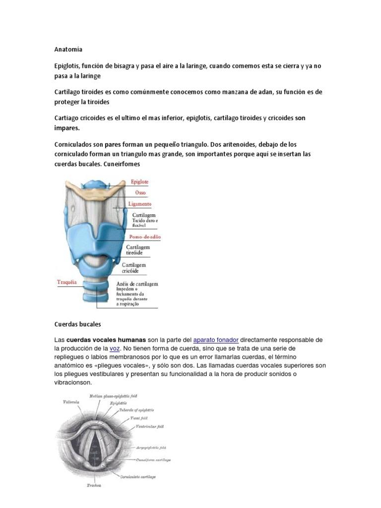 Fantástico Anatomía De Una Manzana Festooning - Imágenes de Anatomía ...