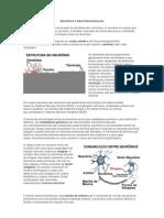 Neurônios e Neurotransmissores