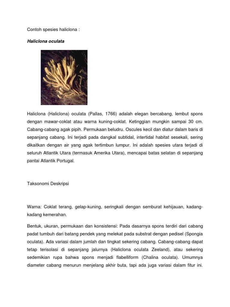 Contoh spesies haliclona