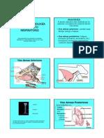 06a - Anatomia y Fisiologia Del Aparato Respiratorio