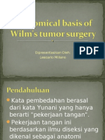 Anatomical Basis of Wilm's Tumor Surgery