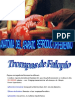 Anatomia Femenina
